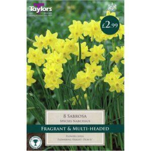 Narcissus Sabrosa 8 Bulbs