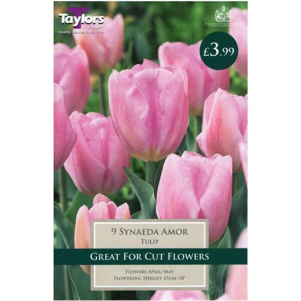 Tulip Synaeda Amor 9 Bulbs