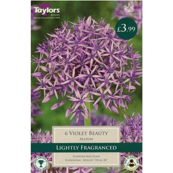 Allium Violet Beauty 6 Bulbs