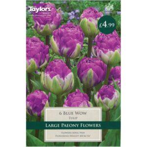 Tulip Blue Wow 6 Bulbs