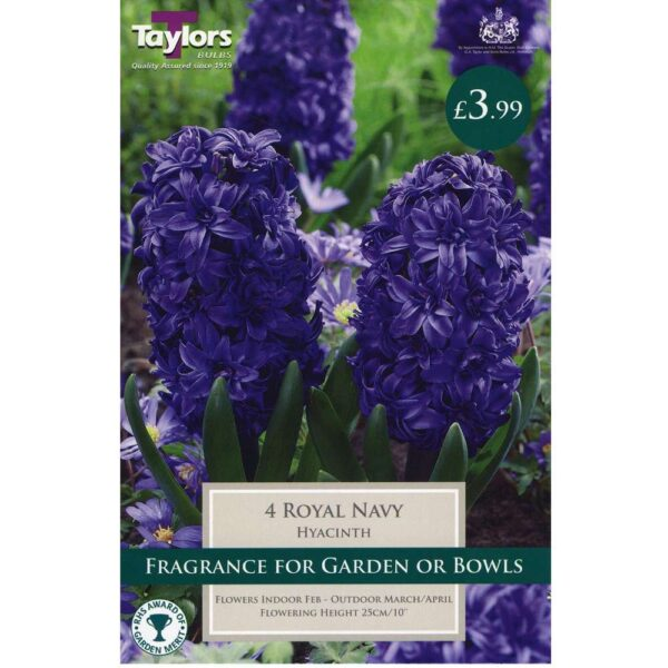 Hyacinth Royal Navy 4 Bulbs