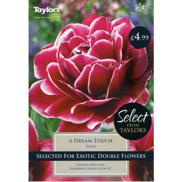 Tulip Dream Touch 6 Bulbs