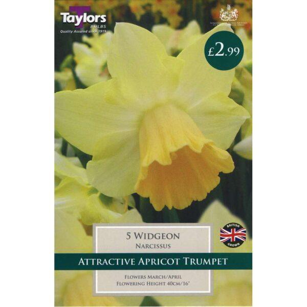 Narcissus Widgeon 5 Bulbs