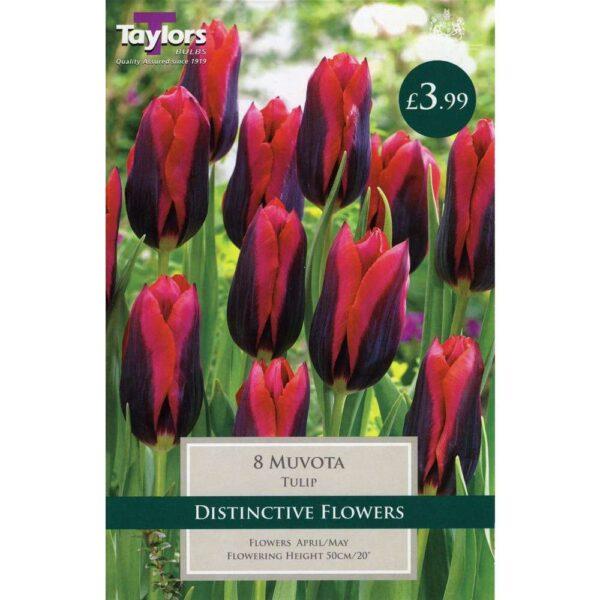 Tulip Muvota 8 Bulbs