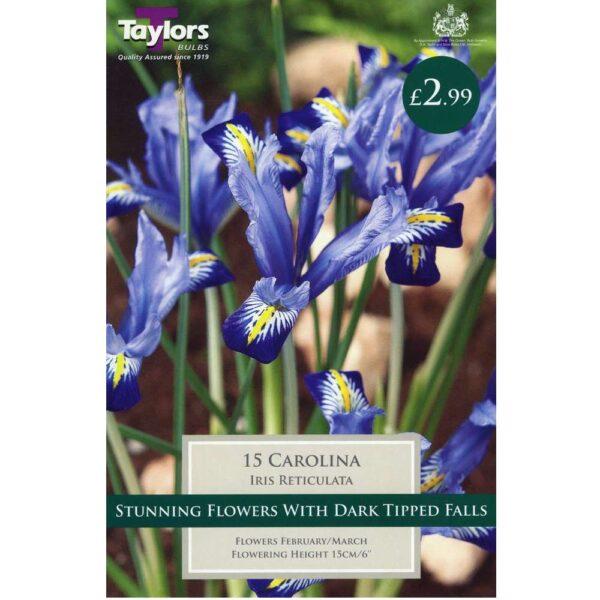 Iris Reticulata Carolina 15 Bulbs