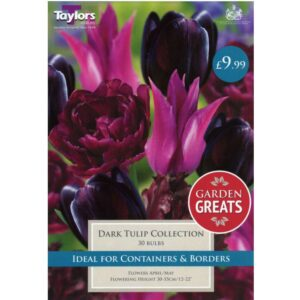 Dark Tulip Collection 30 Bulbs