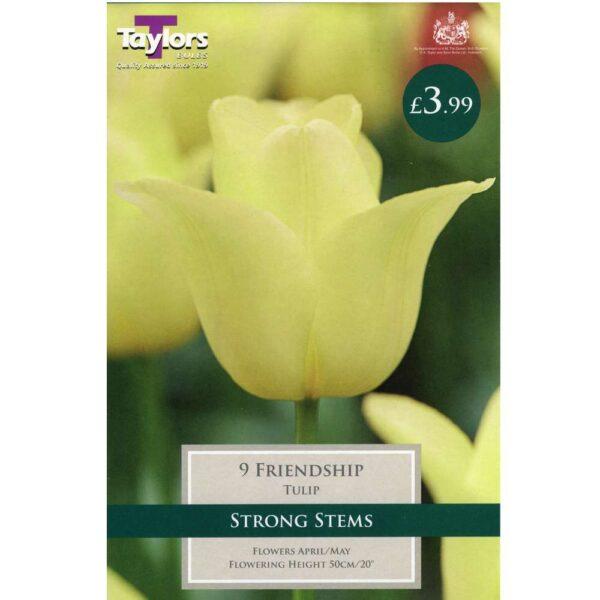 Tulip Friendship 9 Bulbs