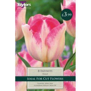 Tulip Infiniti 8 Bulbs