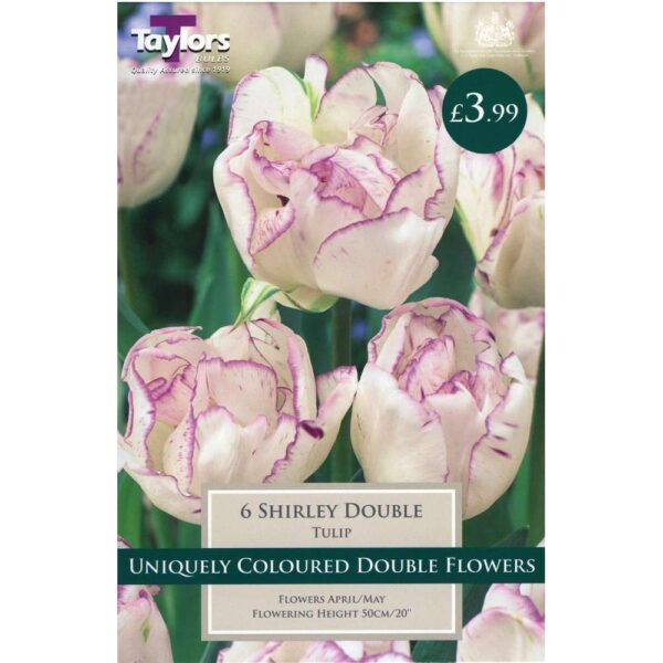 Tulip Shirley Double 6 Bulbs