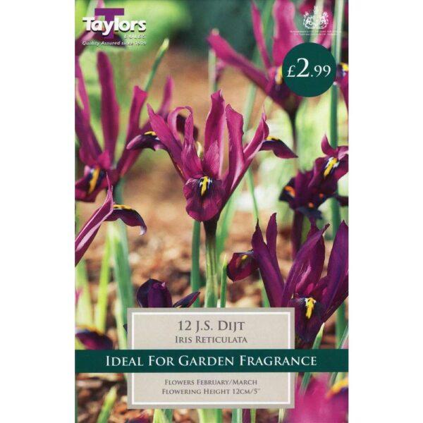 Iris Reticulata J S Dijt 12 Bulbs