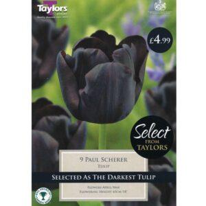 Tulip Paul Scherer 9 Bulbs
