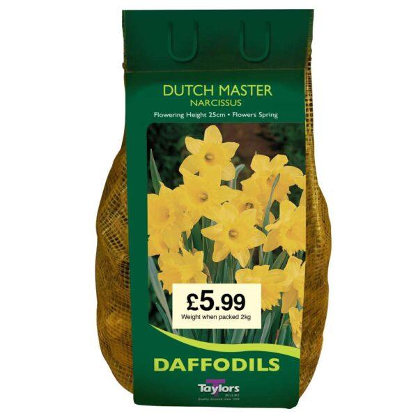 Narcissi Dutch Master Carri-Pack
