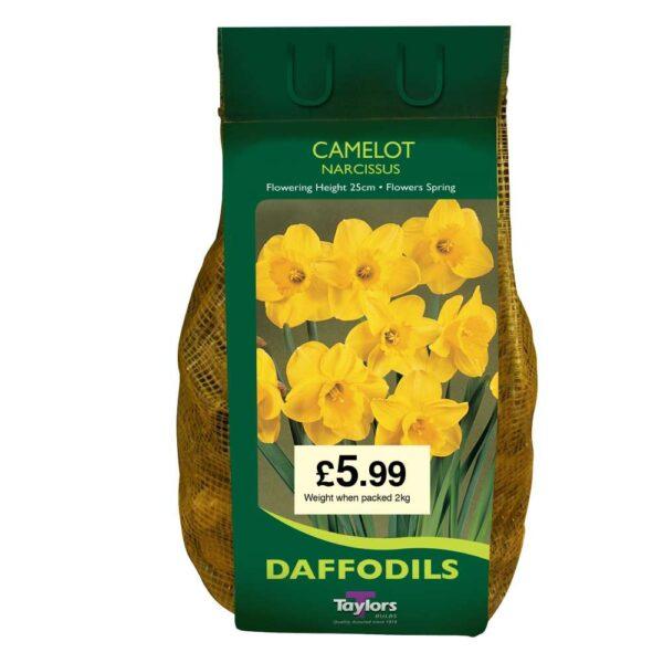 Narcissi Camelot Carri-Pack