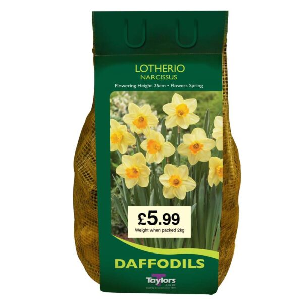 Narcissi Lotherio Carri-Pack