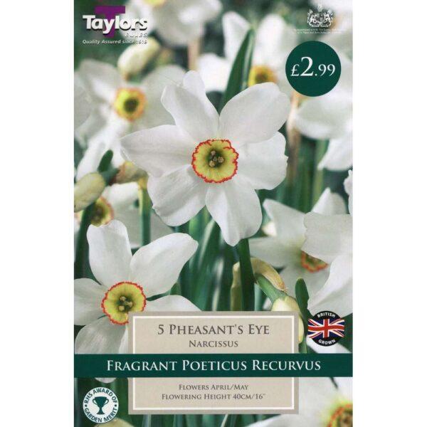 Narcissus Pheasant'S Eye 5 Bulbs
