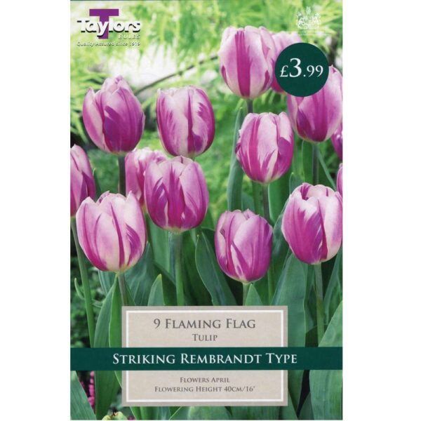 Tulip Flaming Flag 9 Bulbs