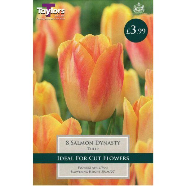 Tulip Salmon Dynasty 8 Bulbs