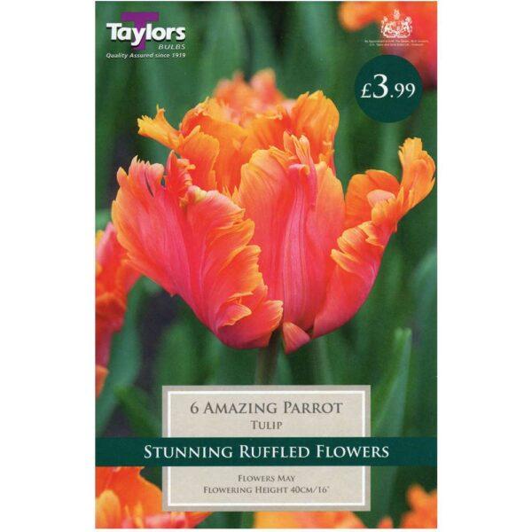 Tulip Amazing Parrot 6 Bulbs