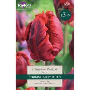 Tulip Shining Parrot 6 Bulbs