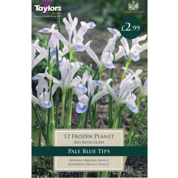 Iris Retic Frozen Planet 12 Bulbs