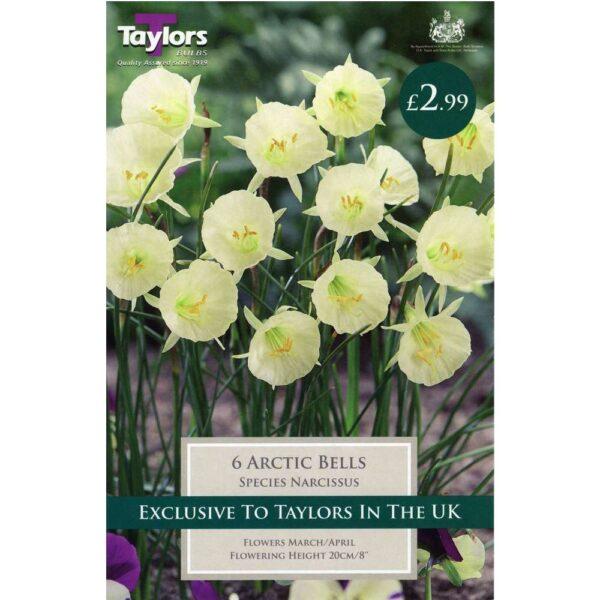 Narcissus Arctic Bells 6 Bulbs