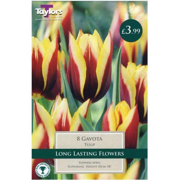 Tulip Gavota 8 Bulbs