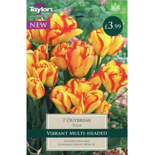 Tulip Outbreak 7 Bulbs