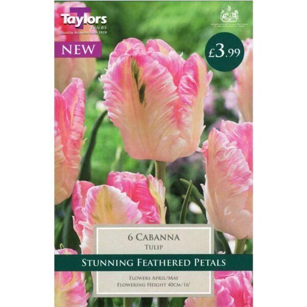 Tulip Cabanna 6 Bulbs