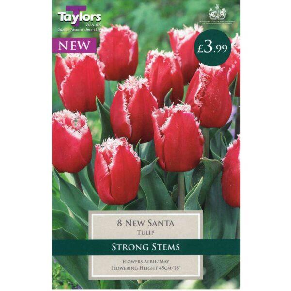 Tulip New Santa 8 Bulbs