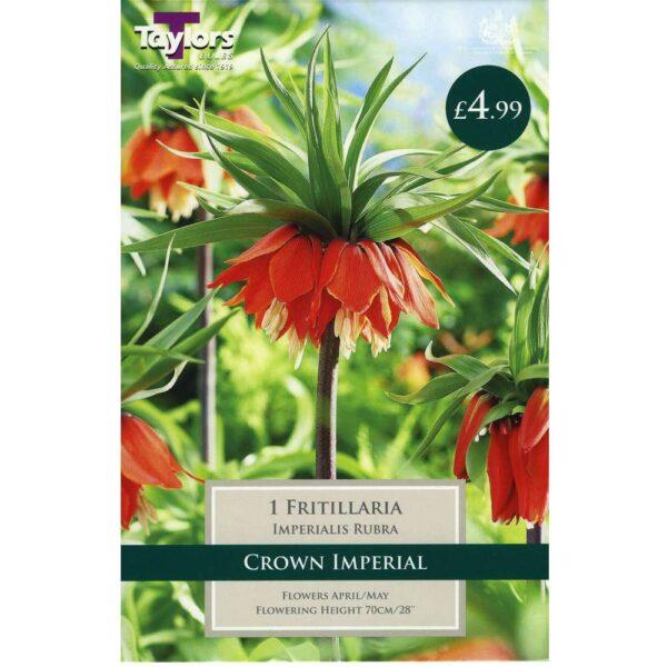 Fritillaria Imp Rubra 1 Bulb