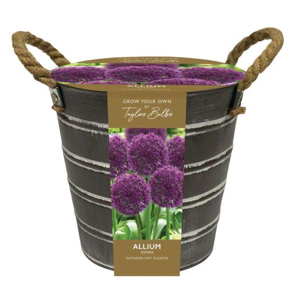 Outdoor Allium Bucket