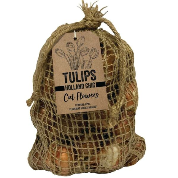 Tulip Holland Chic 12 Bulbs