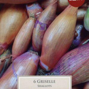 Shallot Griselle x 6