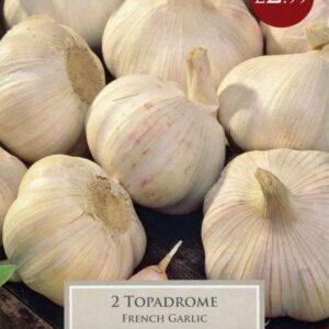 2 French Garlic Topadrome
