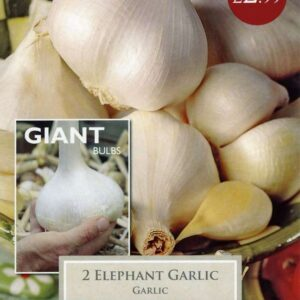 2 Garlic Elephant