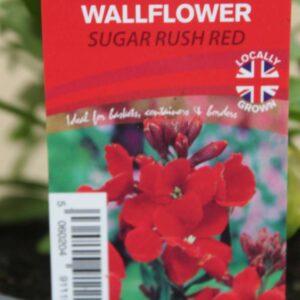 Wallflower Sugar Rush Red