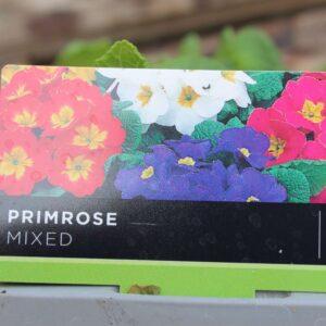Primrose Mixed
